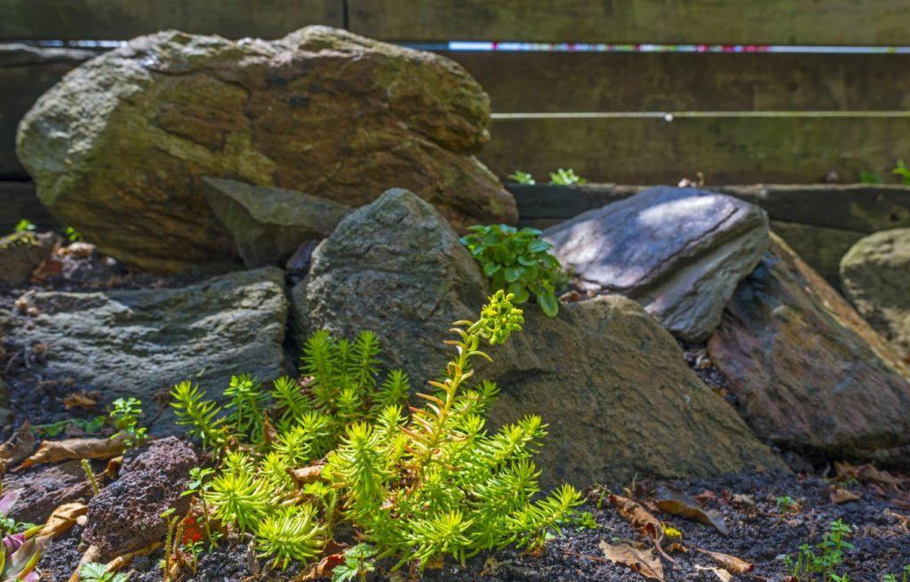 7. Ein kleiner Felsengarten