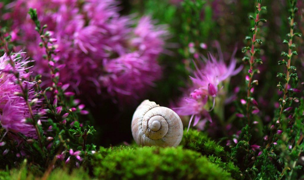 Bei der Wahl der farben in einem kleinen Garten kommt es auf Details an. Nutzen Sie natürliche Farbkontraste und Farbspiele. Das Grün des Moos und manchen kräftigen Violett-Ton von Blüten.