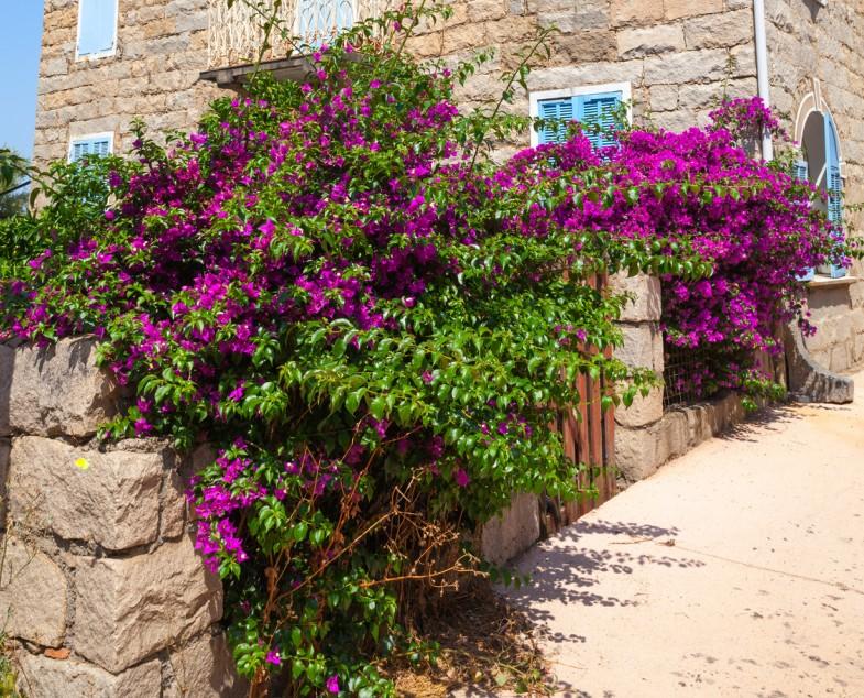 Lila und Magenta sind die Farben für Ihren Garten oder die Steinmauer. Mediterraner Wohnstil kann kräftig wachsen, blühen und duften. Lavendel, Flieder und Oleander geben Ihrem Heim einen Hauch von Italien.