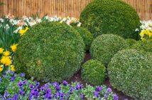 Buchsbaumzünsler biologisch bekämpfen: Hausmittel & mehrBuchsbaumzünsler biologisch bekämpfen: Hausmittel & mehr