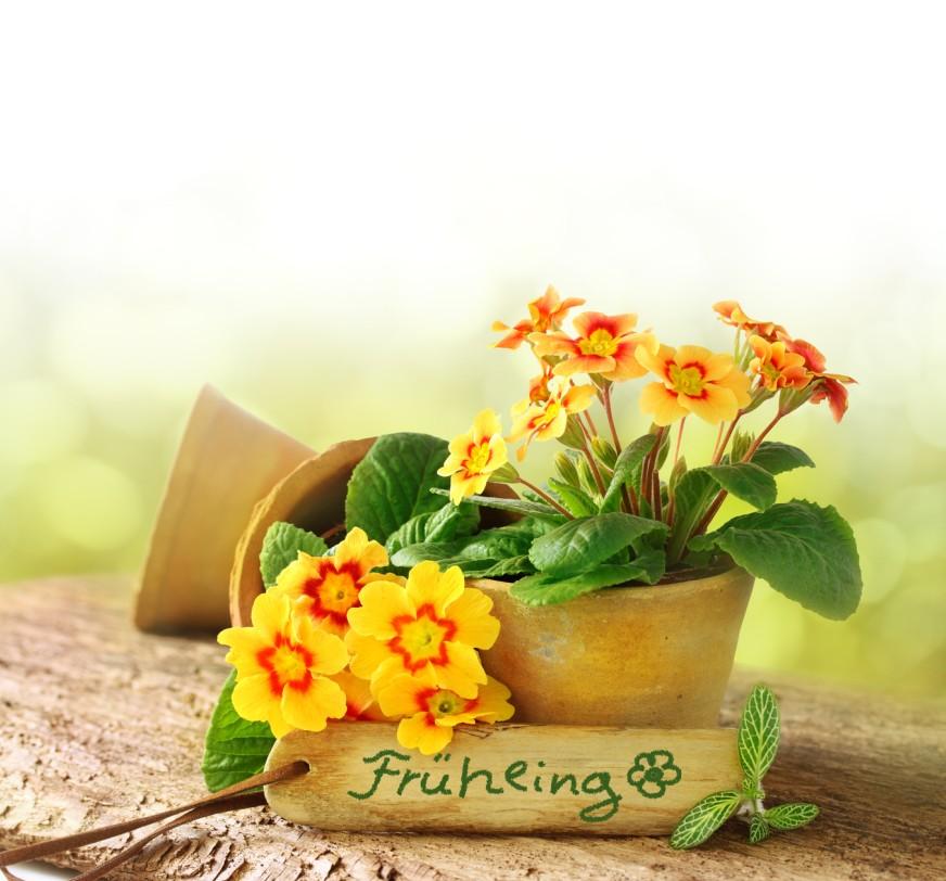 Gelb als zweite Trendfarbe ist bekannt. Gelb wäre ja eigentlich ohnehin eine unserer favoriten gewesen, denn es geht hier ja um Frühlings-Deko. Und im Frühling darf Gelb nun mal nicht fehlen. (#6)