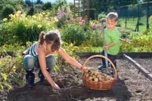 Für Kinder ist die Gartenarbeit eine Sache die sie mit den Eltern gemeinsam erleben können. So wird die Kartoffelernte im Beet zum Erlebnis von Familie und Geborgenheit. Auch das Erleben von Bestätigung stärkt das Selbstbewusstsein der jungen Gärtner. (#4)