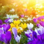 Kleingarten: Die Gartensaison hat begonnen