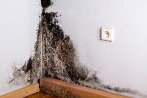 Schwarzschimmel: Schwarzer Schimmel bildet sich oft schnell, wenn die Luftfeuchtigkeit in der Wohnung steigt und keine Klimaregulierung stattfindet. Wenn Thermopenfenster innen nass sind, kann das leicht geschehen und zu einer Gefahr für die Gesundheit werden. (#1)