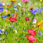 Garten gestalten: 25 Ideen zur Gartengestaltung