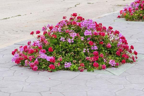 Viele Menschen Müssen Auf Einen Eigenen Garten Verzichten, An Blühenden  Blumen Kann Man Sich Trotzdem