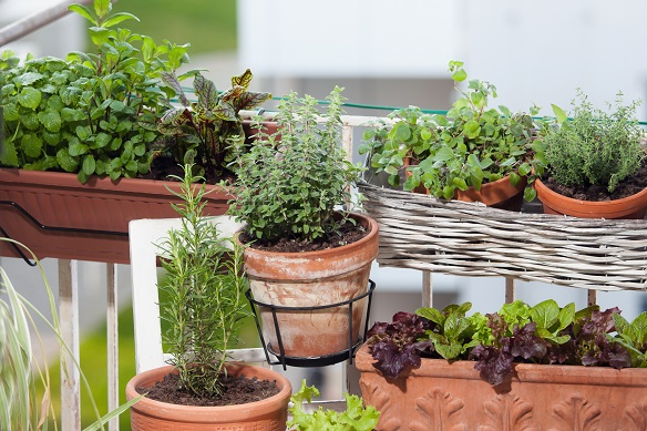 Kräuter- und Gemüse auch dafür eigent sich wunderbar ein Garten