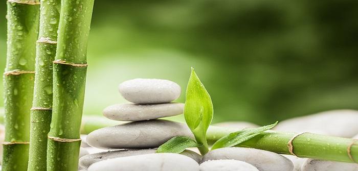 Bambus als Kübelpflanze: So einfach gelingt es!