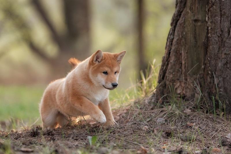 Wer einen Hund hat oder möchte, muss sich bei einer Eigentumswohnung genau informieren - im Einfamilienhaus sind Haustiere auf alle Fälle kein Problem. (#08)