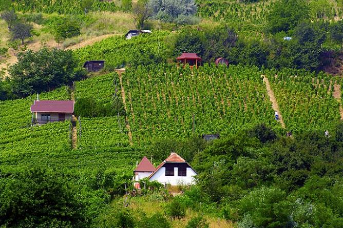 Das ungarische Gesetz unterscheidet nicht nur zwischen EU-Bürger und Kaufinteressenten, die aus Nicht-EU-Ländern kommen, sondern auch zwischen fruchtbarem und nicht-fruchtbarem Boden und dessen Kauf. (#06)