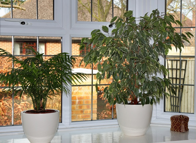 Im Folgenden werden einige pflegeleichte Pflanzen vorgestellt, die einerseits genügsam sind und andererseits interessante Akzente setzen. Unverwüstlich und trotzdem dekorativ, so wünscht man sich die ideale Zimmerpflanze.(#03)