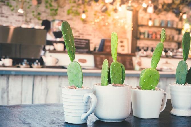 Meistens ist es die Winterzeit, die auch den Zimmerpflanzen zusetzt. In dieser Phase benötigen auch relativ unempfindliche Topfpflanzen meistens etwas mehr Aufmerksamkeit. (#01)