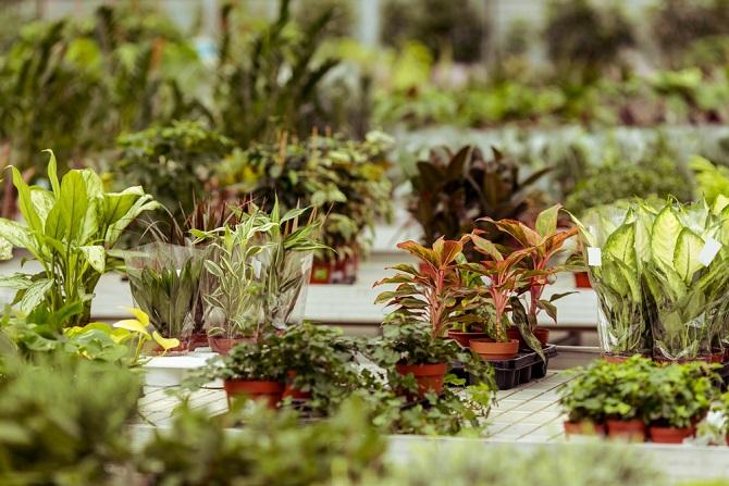 Pflegeleichte Pflanzen eignen sich nicht nur für Einsteiger, die erst wenig Erfahrung mit der nötigen Pflege haben. Auch diejenigen, die immer im Zeitstress sind, freuen sich über anspruchslose Grünpflanzen. (#02)