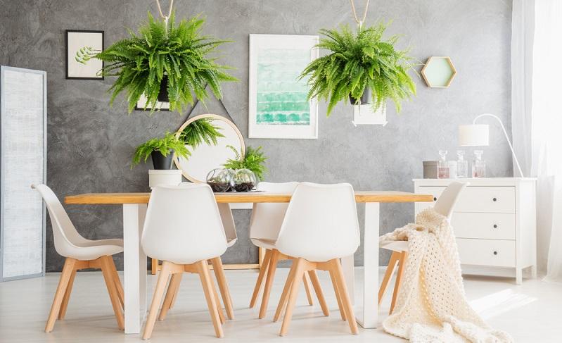Ihnen fehlt die Stellfläche für große Blumentöpfe? Oder sind Ihre Fensterbretter zu schmal? Dann können Sie Hängepflanzen einsetzen, wenn Sie auf Pflanzen nicht verzichten wollen. (#02)