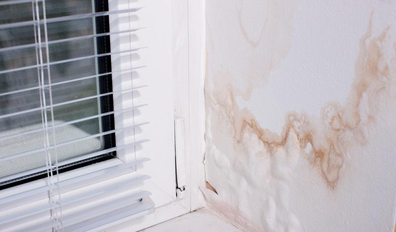 Sofort handeln, wenn sich erster Schimmel am Fenster oder sonstwo in Innenräumen zeigt. (#1)