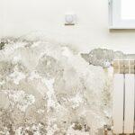 Feuchte Wände: Ursachen, Folgen und Maßnahmen