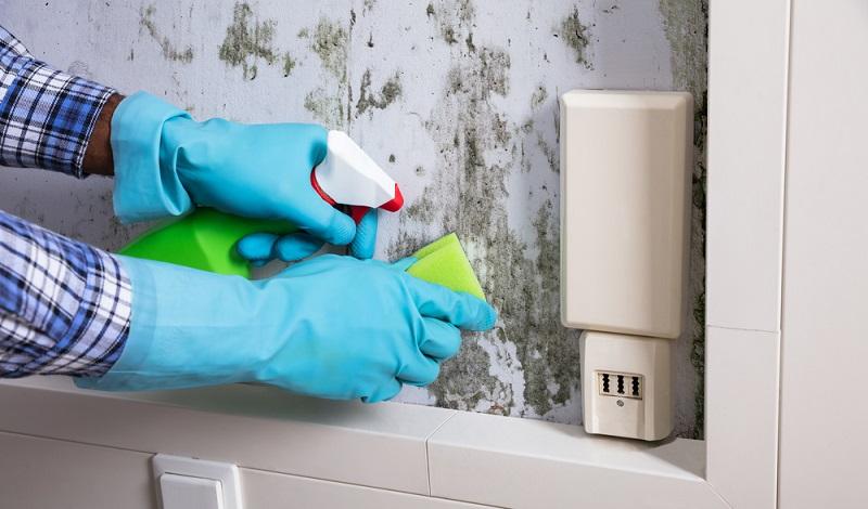 Mieter haben Rechte, wenn die Wände feucht sind und Schimmel auftaucht. Manchmal lässt dieser sich mit einen Spezialmittel schnell selbst entfernen. (#3)