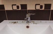 Schimmel im Bad: Vorbeugen und entfernen!