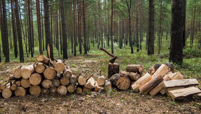 Das richtige Brennmaterial ist natürlich besonders wichtig, wenn man einen Kamin oder Kaminofen betreibt. (#04)