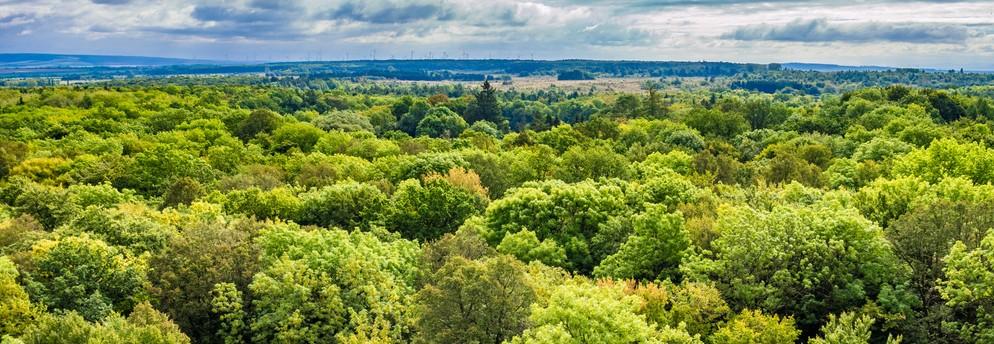Nicht einmal hundert Baumarten zählt der deutsche Wald. Im Vergleich zur übrigen Welt ist die Vielfalt an Baumarten in Deutschland geradezu mickrig! (#1)