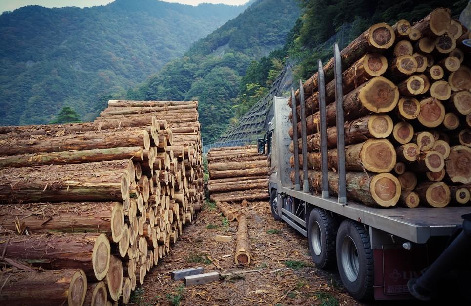 Als Nutzholz kommen nicht alle Baumarten infrage. (#12)