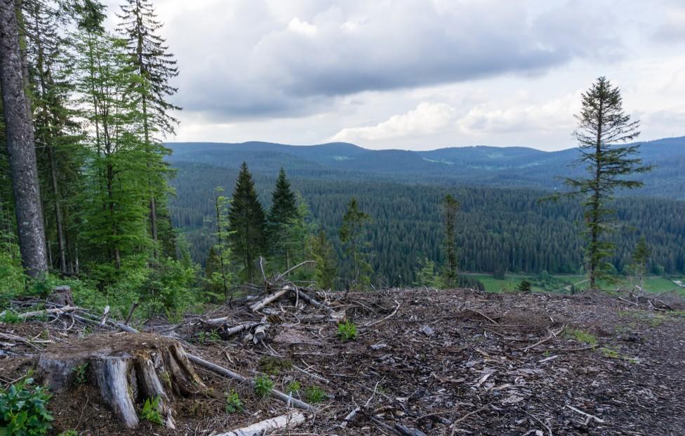 Das Waldsterben hat die Baumarten Deutschlands ganz unterschiedlich heimgesucht. (#13)