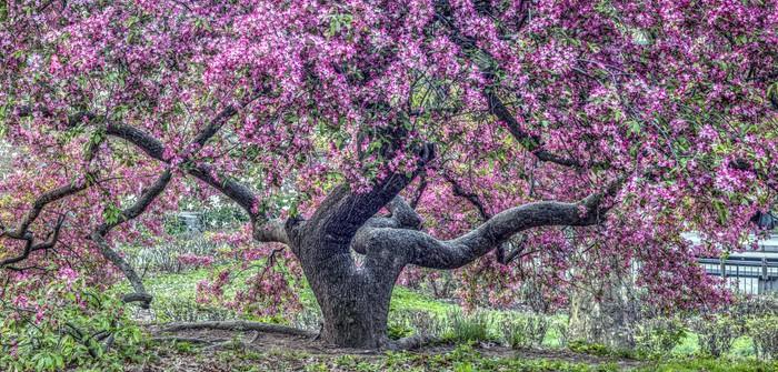 Baumarten: Alle Arten auf einen Blick