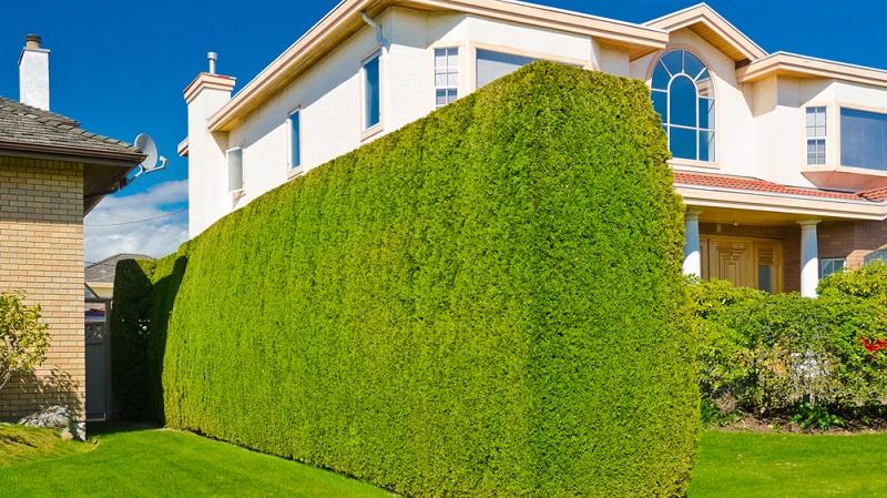 Hecken sind besonders beliebt, weil sie eine natürliche Abgrenzung ermöglichen, die in der Regel keine ästhetischen Probleme (wie z. B. bei einer hohen Mauer aus Beton) aufwerfen.