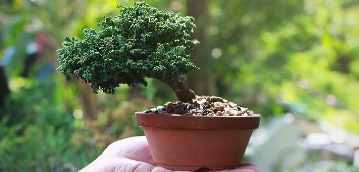 Bonsai Pflege: 3 Fehler, die häufig passieren