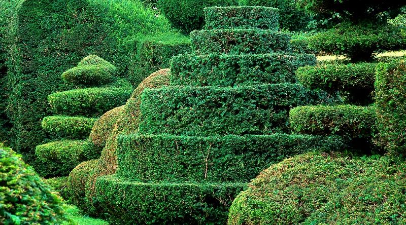 Geübte Gärtner können wahre Kunstwerke aus der Eibe schneiden.