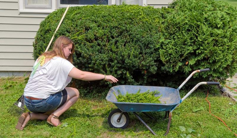 Will man die Eibe schneiden, sollte dies nicht bei Sonne oder Frost geschehen, damit sich die Pflanze schnell erholen kann.