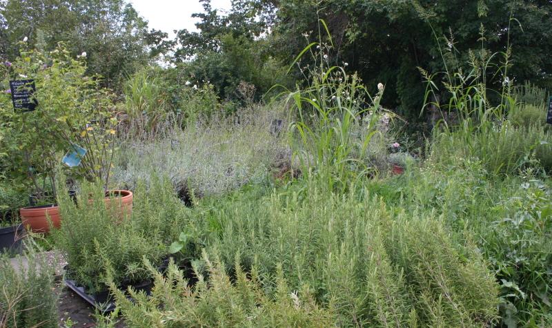 Bauerngarten Blumen sind eine tolle Möglichkeit Ihren Garten zu gestalten.