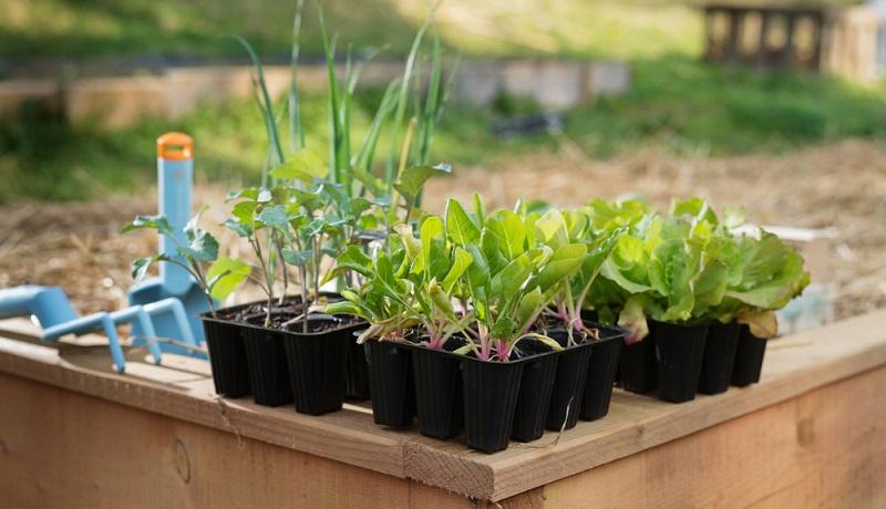 Die Gartenarbeit im März sollte auch die <strong>Vorbereitung des Frühbeets</strong> umfassen. Hier können die ersten Pflänzchen sogar schon <strong>Ende Februar</strong> eingesetzt werden. ( Foto: Shutterstock-KaliAntye )