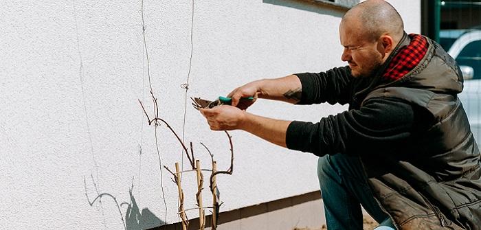 Gartenarbeit: Was Sie im März nicht vergessen sollten…