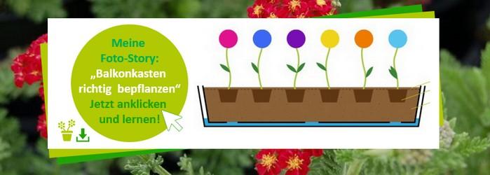 Balkonkasten richtig bepflanzen: So lohnen sich die Kosten für den Balkonanbau richtig