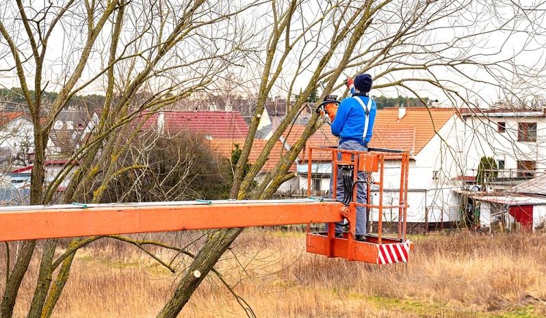 Mit einer Hubbühne lassen sich ganz einfach Bäume schneiden. ( Foto: Shutterstock- Lubos K  )